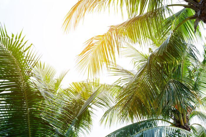 Kuenstliche Palmen bei H.Andreas kaufen