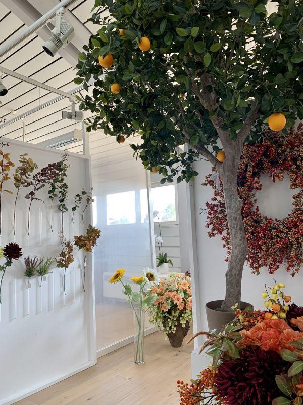 Herbstliche Pflanzen im H.Andreas Showroom entdecken