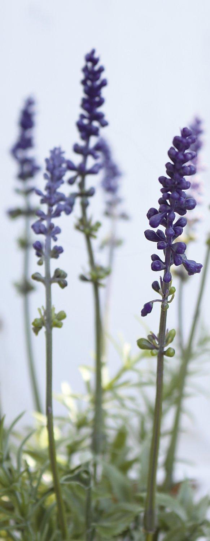 Künstlicher Lavendel, getopft, 35 cm, dunkelviolett