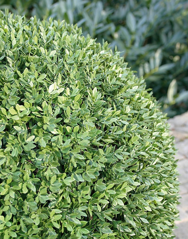 Künstliche Buchsbaumkugel aus Kunststoff, Ø 50 cm, grün
