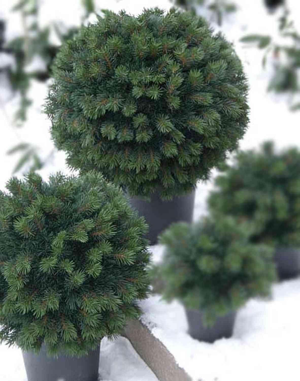 Künstliche Tannenkugel, gemischt, getopft, 55cm, grün