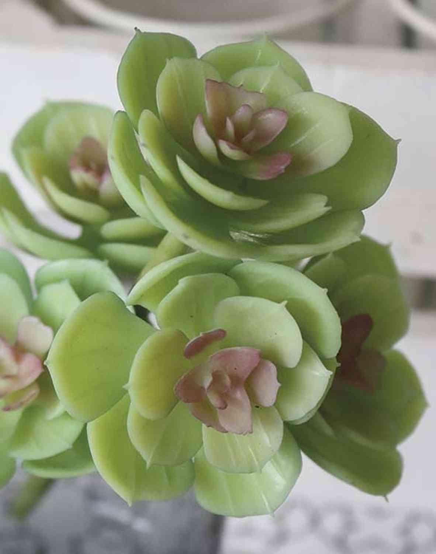 Künstliche Aeonium auf Steckstab, 18 cm, grün-rosa