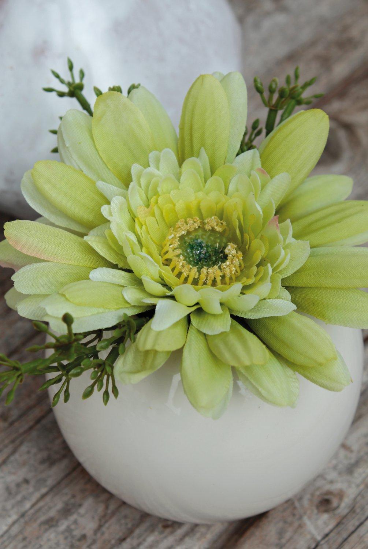 Künstliche Gerbera in Keramiktopf, 12 cm, creme-grün