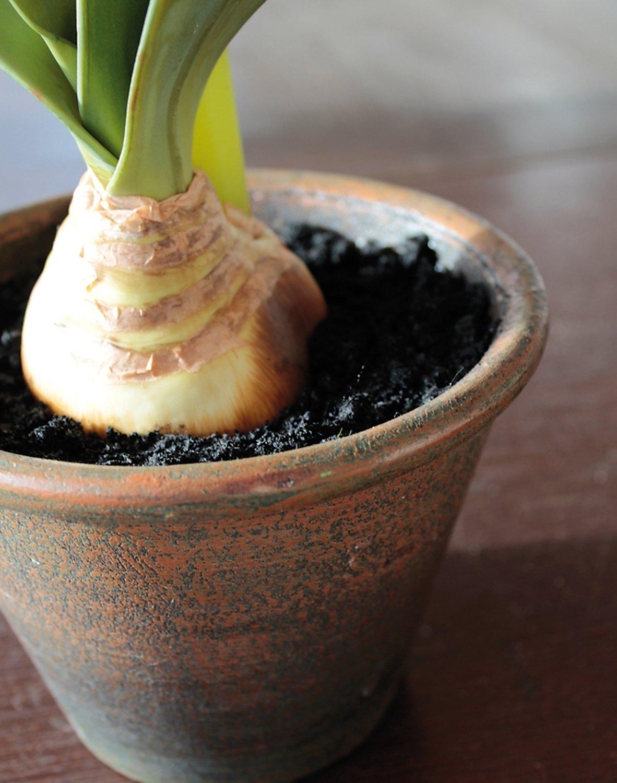 Künstliche Amaryllis, getopft, 65 cm, bordeauxrot