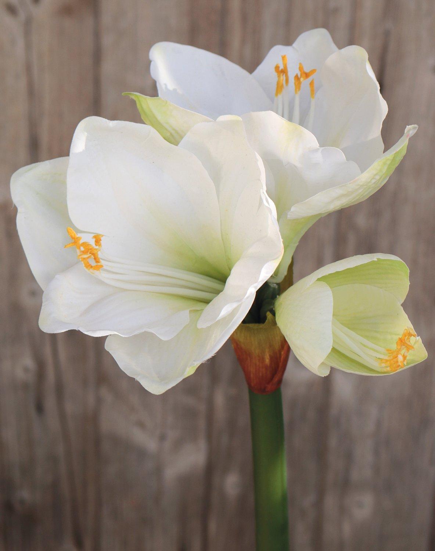 Künstliche Amaryllis, 66 cm, weiß-grün