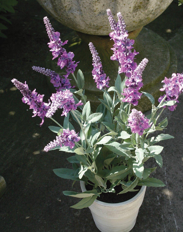 Künstlicher Lavendelbusch, getopft, 48 cm, hellviolett-dunkelviolett