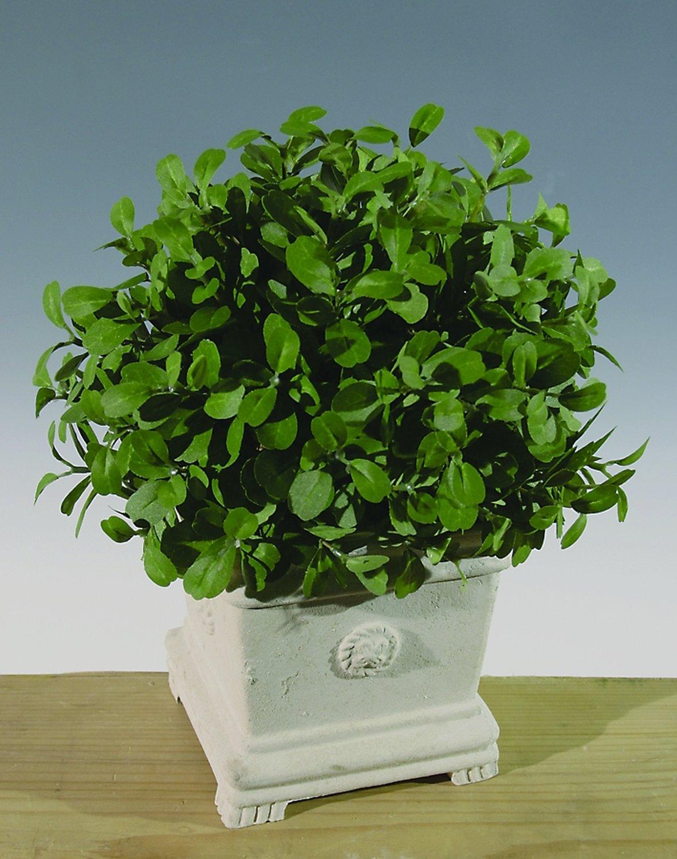 Künstliche Buchsbaumkugel, getopft, 31 cm, Ø 21 cm, grün