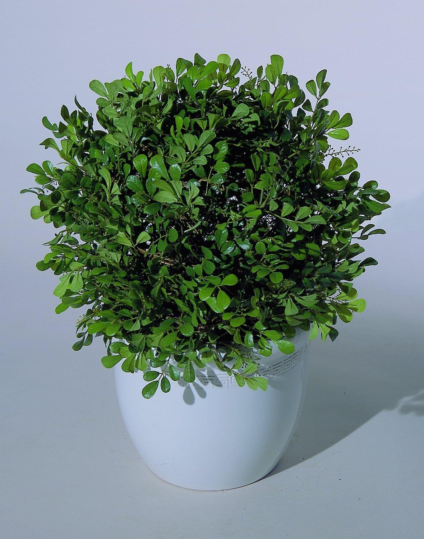 Künstliche Buchsbaumkugel auf Stab, Ø38cm, 50cm, grün