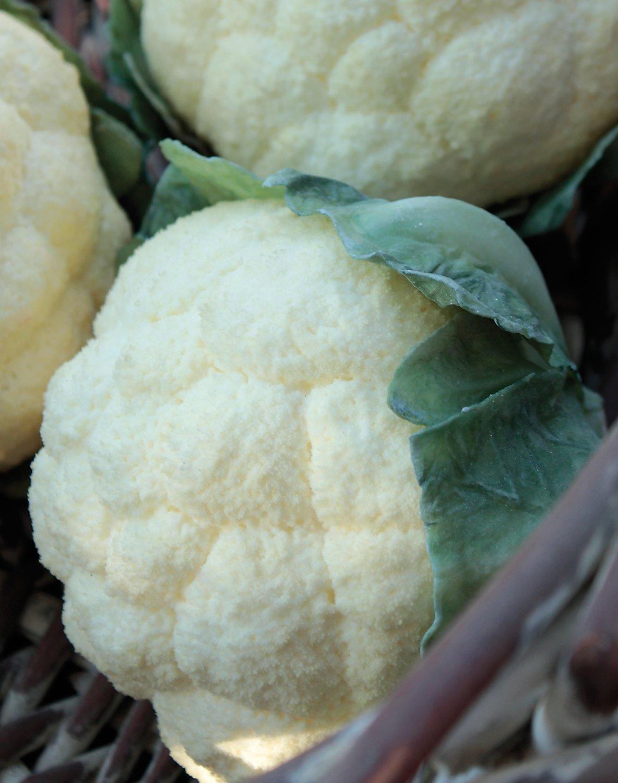 Künstlicher Blumenkohl, 16 cm, weiß-grün