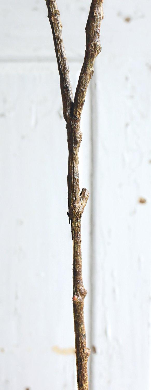Künstlicher Eukalyptuszweig, 5-fach, 91 cm, dunkelgrün