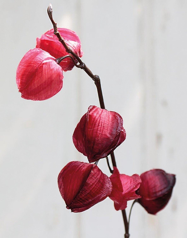 Künstliche Physalis, 11 Früchte, 95 cm, rot-schwarz