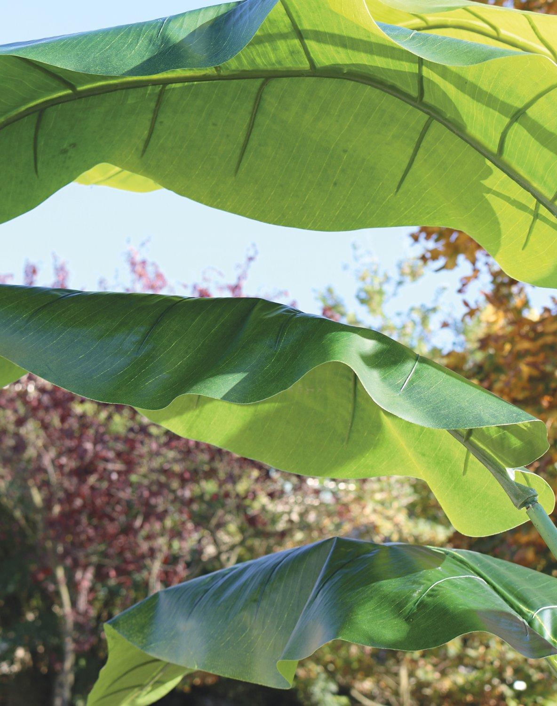 Künstliche Heliconie, getopft, 300 cm, grün