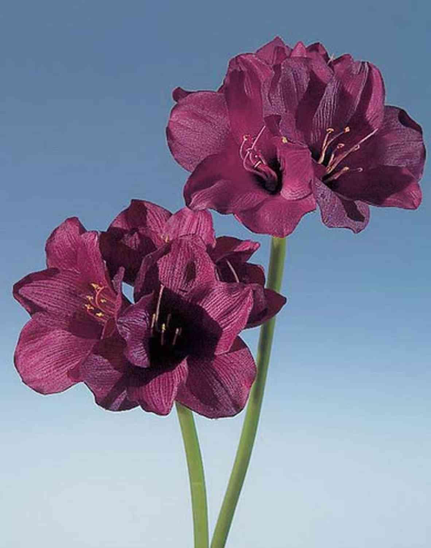 Künstliche Amaryllis, 66 cm, burgunderrot