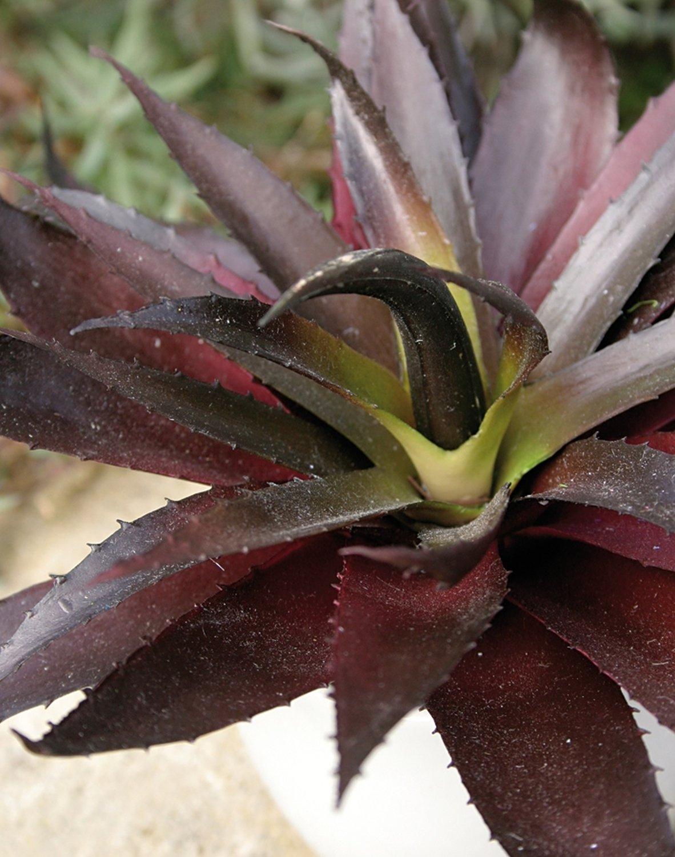 Künstliche Aloe in Keramiktopf, 20 cm, grün-burgunderrot