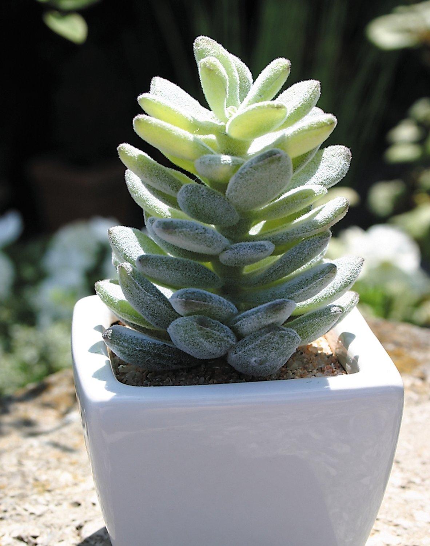 Künstliche Agave in Keramiktopf, 13 cm, grün