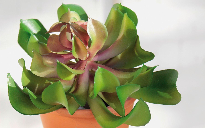 Künstliche Aeonium auf Steckstab, 13 cm, Ø 10 cm, grün