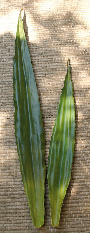 Künstliche Aloe Vera Blatt, 60 cm, grün