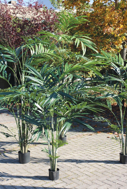 Künstliche Kentia-Palme, getopft, 270 cm, grün