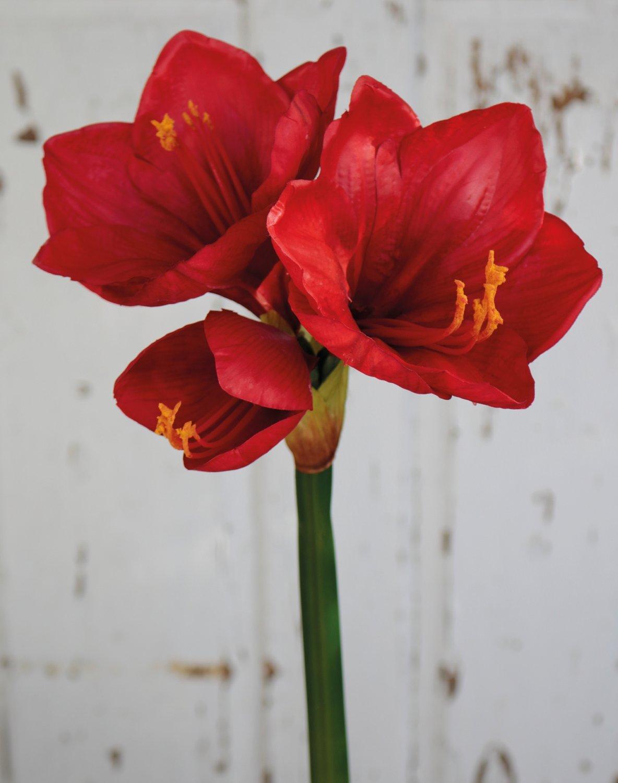 Künstliche Amaryllis, 66 cm, rot