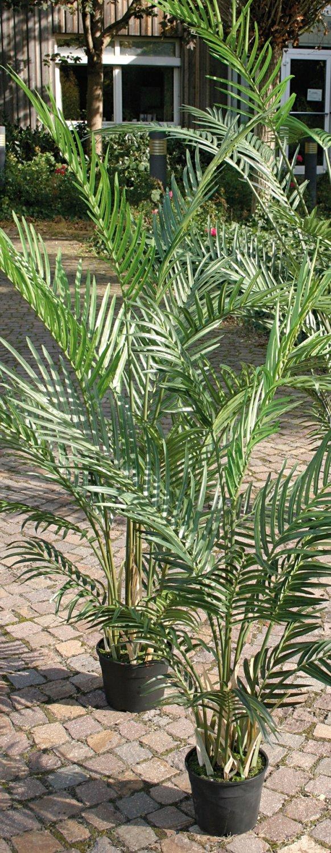 Künstliche Arecapalme, getopft, 90 cm, grün