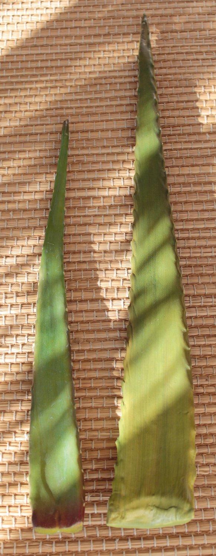 Künstliche Aloe Vera Blatt, 63 cm, grün