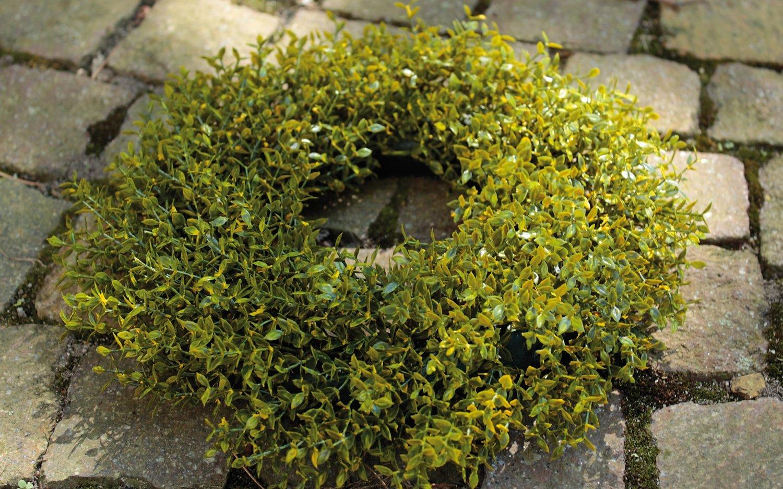 Künstlicher Graskranz, Ø 20 cm, grün